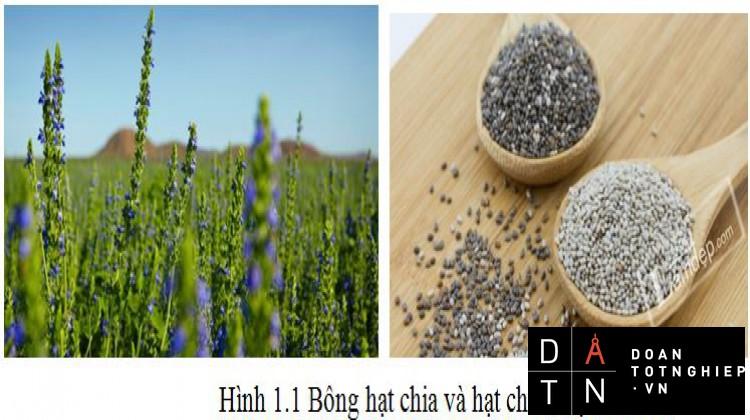 ĐỒ ÁN TỐT NGHIỆP Nghiên cứu và chế tạo máy tách hạt từ bông hạt chia (Salvia)
